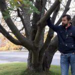 Heli Laine Muotokuva puun vieressä