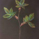 Luova piirustus Kasviaihe puuväreillä mustalla pohjalla