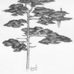 Luova piirustus Havupuu lyijykynällä