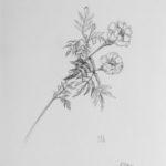 Luova piirustus Kukka lyijykynällä