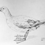 Luova piirustus Albatrossi lyijykynällä