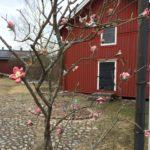 Rauman kuvataidekoulu 2018 oppilaiden yhteinen keraamisten kirsinkankukkien puu