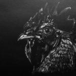 Outi, Kukko valkoisella pastellikynällä mustalle paperille mallina Alan Shapiron Rooster portrait 2010