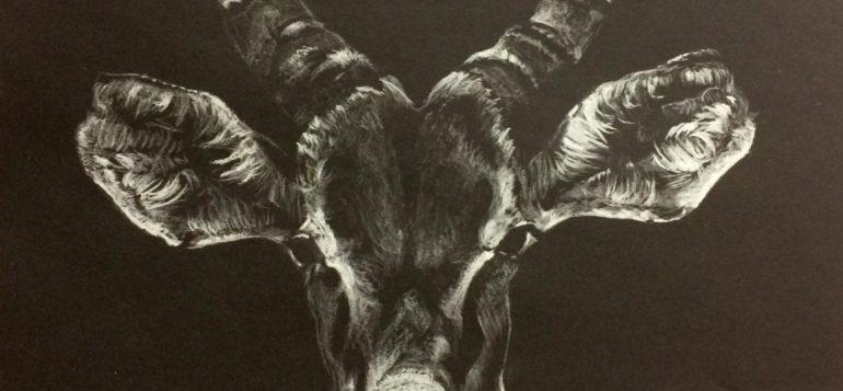 Antilooppi valkoisella mustalle paperille - Outi