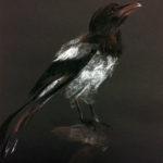 Harakka pastelliliitupiirros mustalle paperille - Outi
