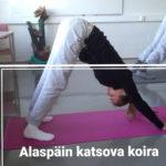 Joogaa selän hyvinvointiin (1)