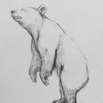 Karhu lyijykynällä - Minna Kouva