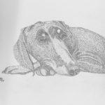 Koira makuulla lyijykynäpiirros pistetekniikalla - Ossi