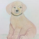 Koiranpentu - Tuija