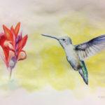 Kolibri akvarelli ja puuvärit - Outi