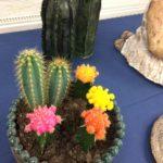 Lapin keramiikka, kaktusruukkuja