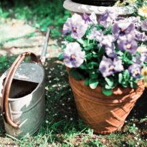 Kastelukannu ja lilat kukat