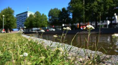 Rauman Kanali, keskusta, kesä