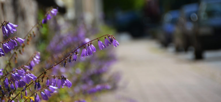 Kukkia pyörätien varrella.