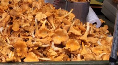 Sienestyskauden saalista