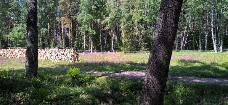 Laidunalue kesällä Päivärannassa.